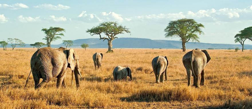 3 Days  Tanzania Budget Safaris