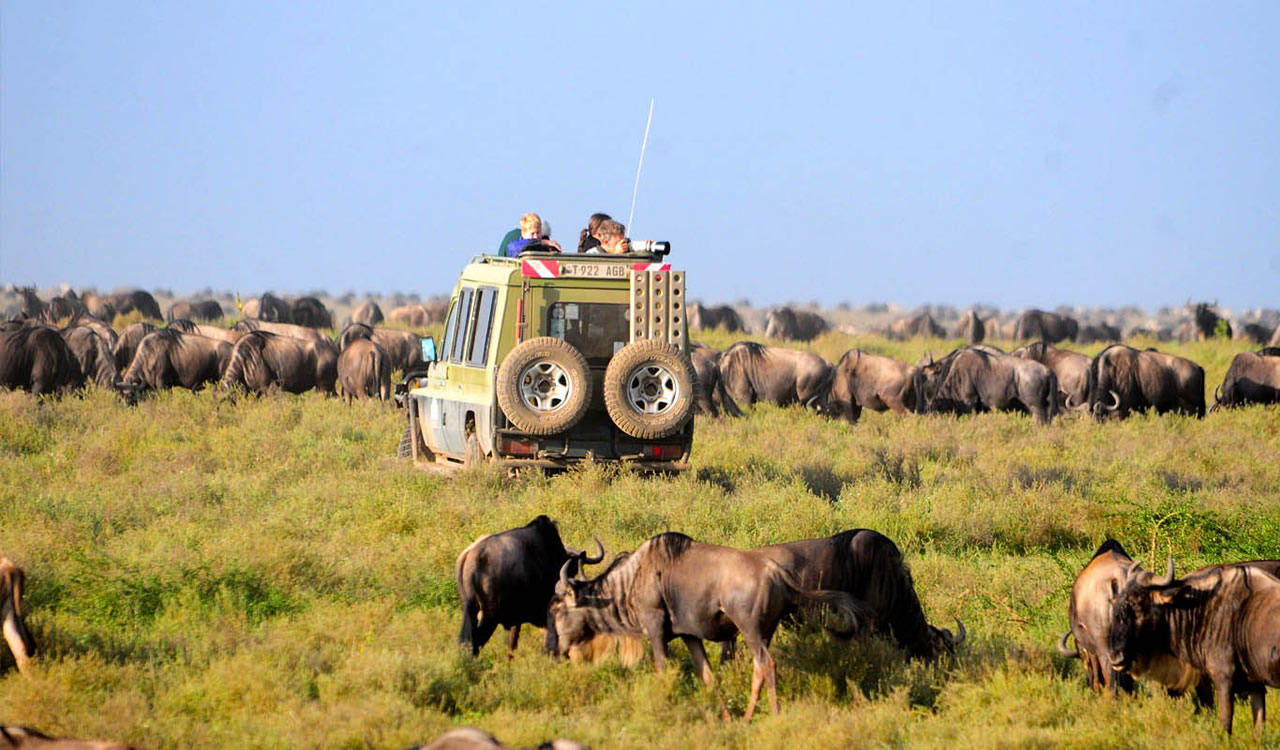 3 Days Wildebeest Migration