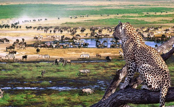 4 Days safari Serengeti-Ngorongoro crater