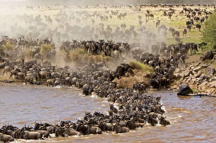 7 Days Serengeti Wildebeest Migration