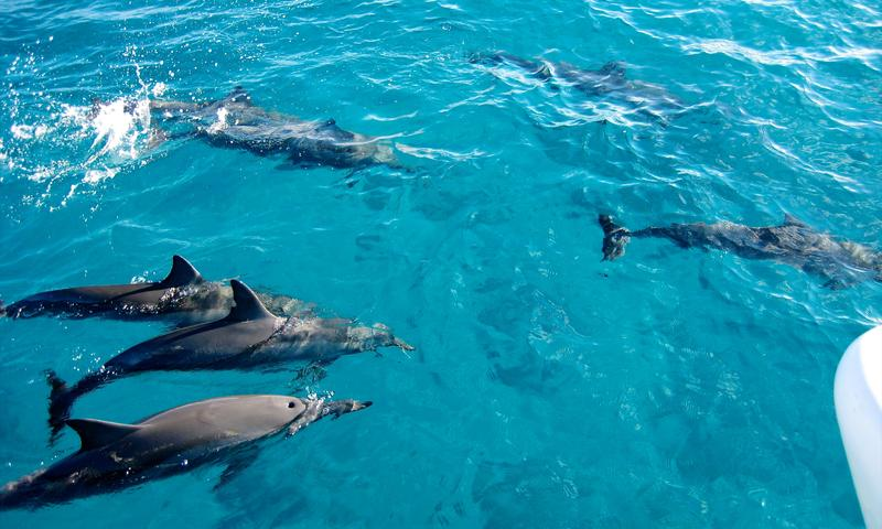 Day Trip to  Dolphin Snorkeling and Jozani Forest Tour